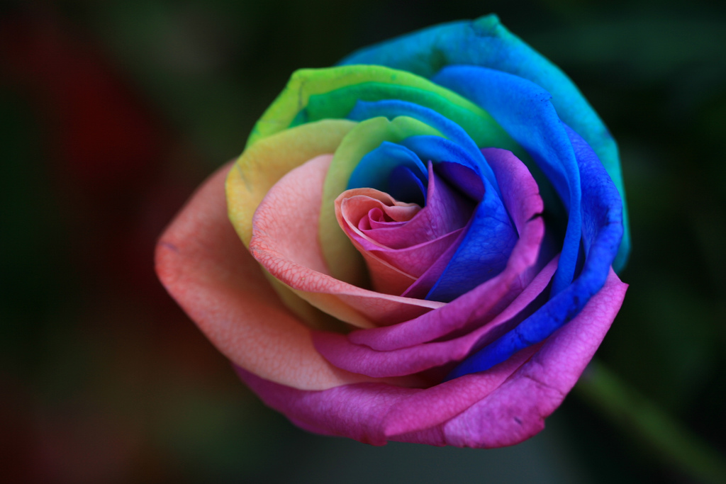 instructions to make rainbow roses