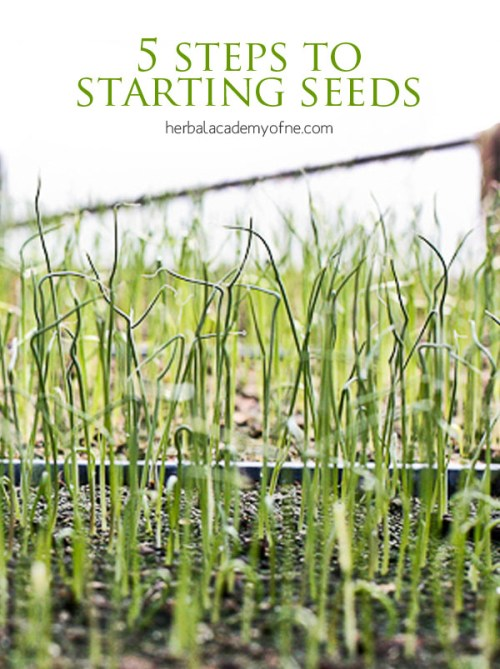 planting basil instructions from seedling